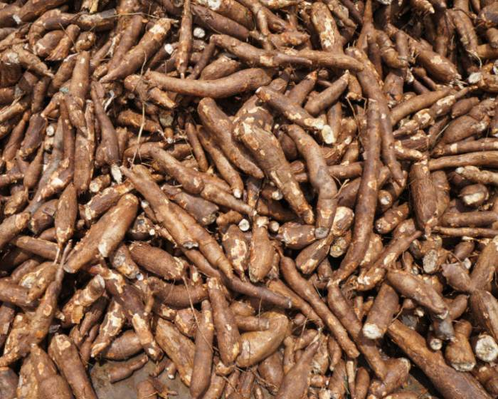 Federal government launches cassava seed tracker, sets to lead world market